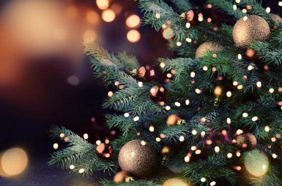 Pour Noël, les Français resteront fidèles au sapin naturel