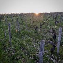 Les voyants sont au vert pour les vins bio français
