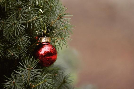 Des sapins de Noël en vente dès le 20 novembre chez les fleuristes