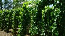 Dans le vignoble avec la famille Trapet