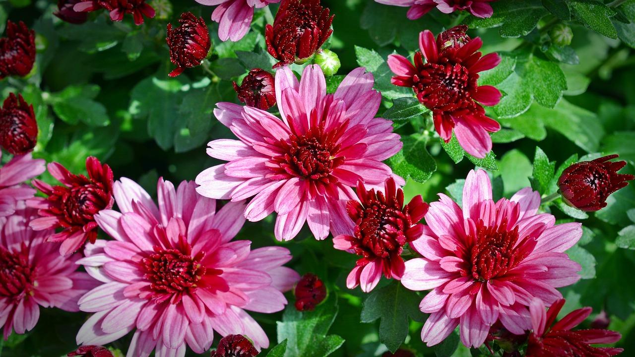 Toussaint : le marché le plus important pour les fleurs de cimetière