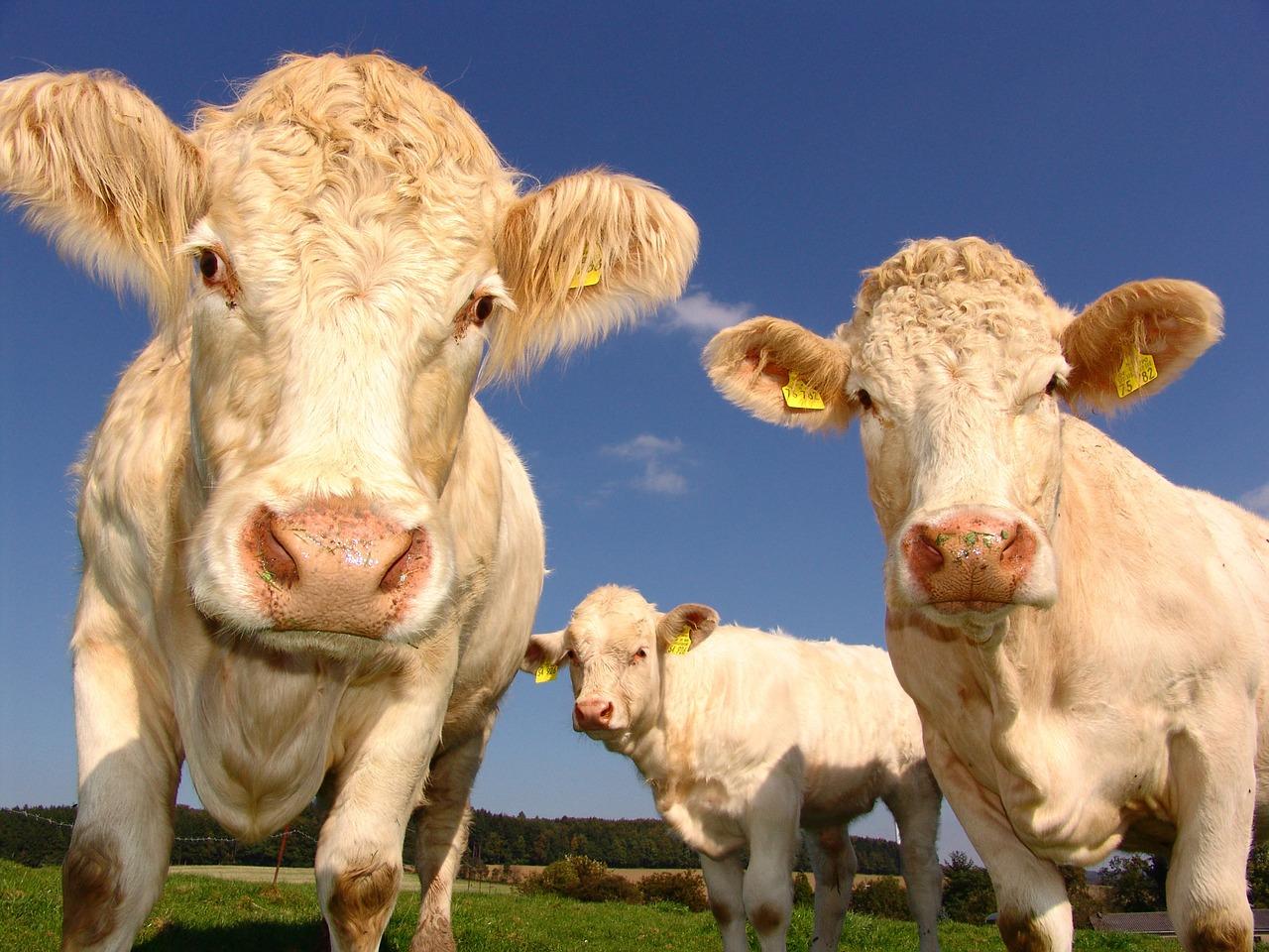 États généraux de l'alimentation : les propositions d'Emmanuel Macron pour le revenu des agriculteurs