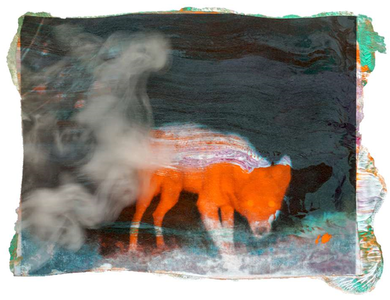 A Secret Life of Animals #51 2019 Tirage numérique, édition limitée Dimensions : 50 x 65 cm