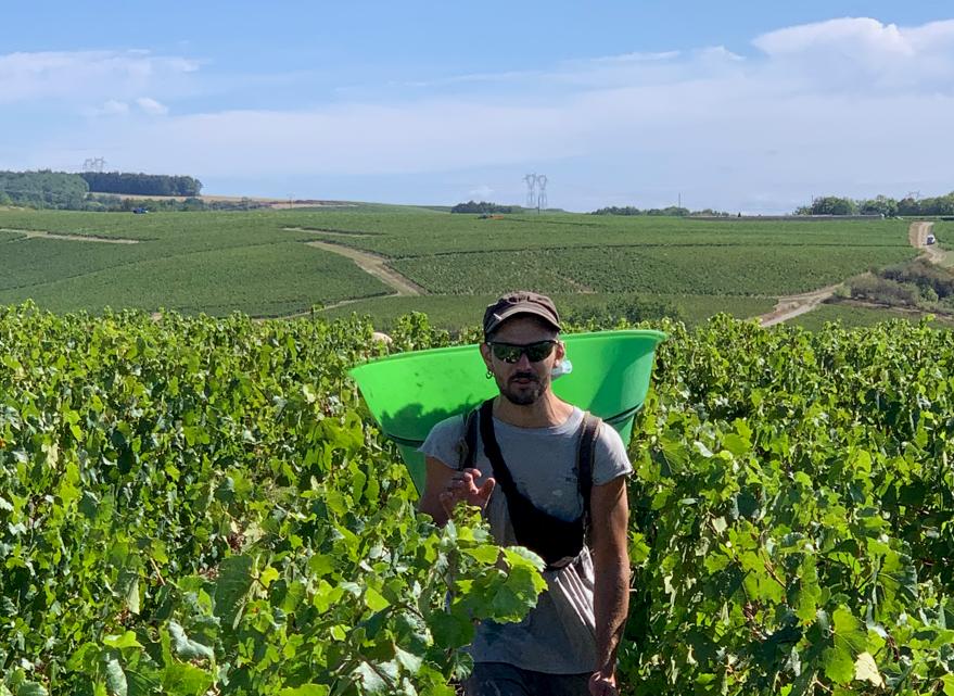 Ambiance morose dans le vignoble français en dépit d'une vendange pleine et de qualité