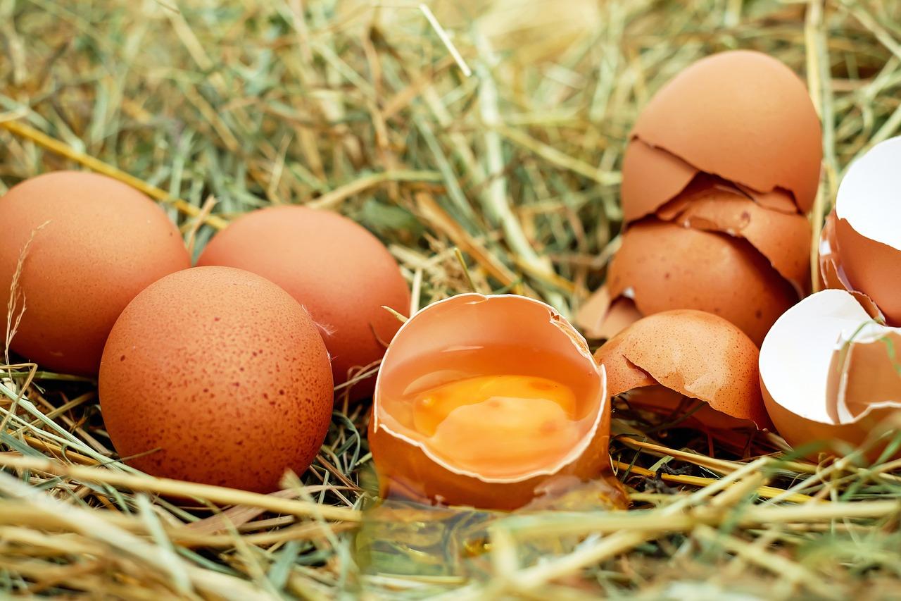 Aldi ne vendra plus d'œufs de poules élevées en batterie