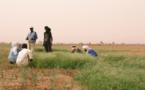 Niger : 20 millions d'euros auraient été versés aux preneurs d'otage