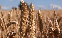 Crise du blé : la FNSEA demande l'aide du gouvernement