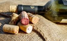 Les vignobles à la peine en 2016, la production attendue en forte baisse