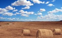 Hausse modérée du revenu moyen des agriculteurs