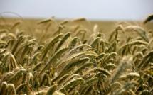 Agriculture : la valeur baisse, le bio progresse