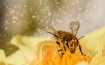 Le gouvernement alloue 3 millions pour les apiculteurs