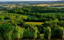 Stratégie d'appellation : Madiran et Pacherenc, des outsiders magnifiques