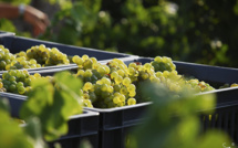 L'Italie devient le premier producteur de vin du monde en 2013