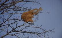 Les sacs plastiques à usage unique supprimés en 2016