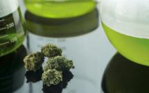 L'Italie veut légaliser le cannabis