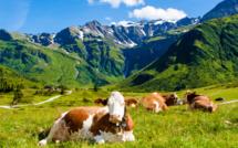 500 millions d'euros d'aide d'urgence pour les agriculteurs européens