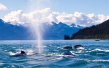 L'Alaska se prépare à... taxer les revenus
