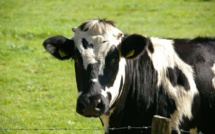 Bruxelles débloque 500 millions d'euros pour l'agriculture